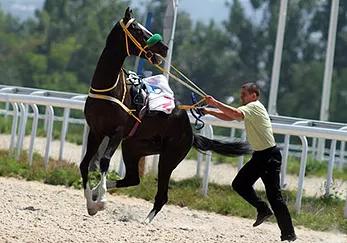 Horses: Naughty or Misunderstood?