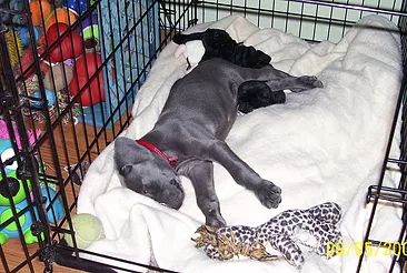 Safe Retreat or Cage? – Positive Crate Training