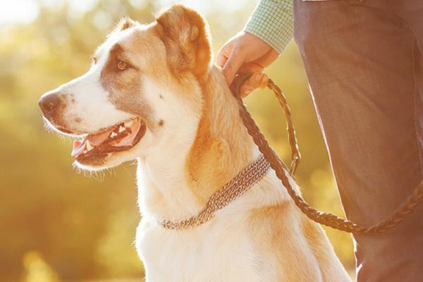 Reactive Dog Training | Animal Training | South Oxfordshire