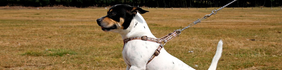 Reactive Dog Training | Animal Training | Shropshire