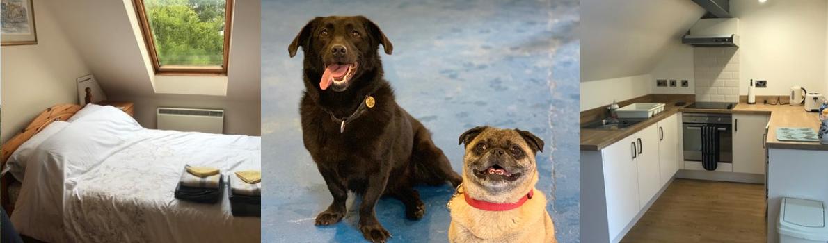 Dog Friendly Holidays | Animal Training | Shropshire